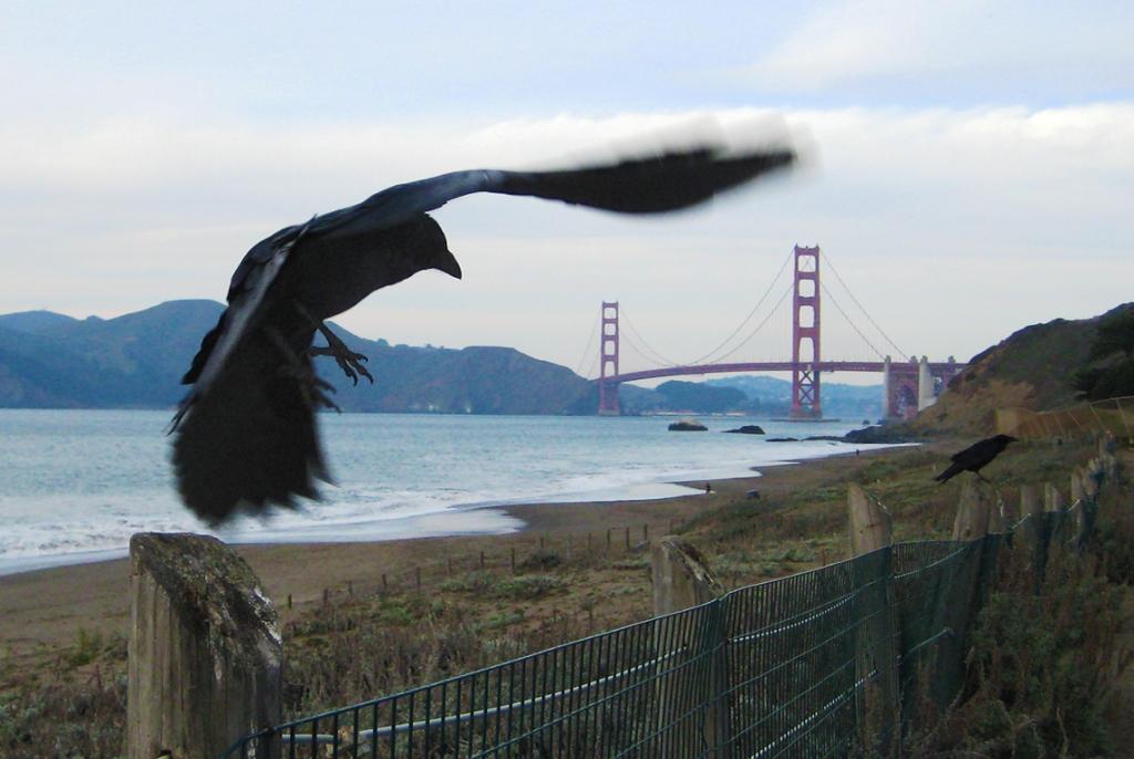 The crow and the bridge