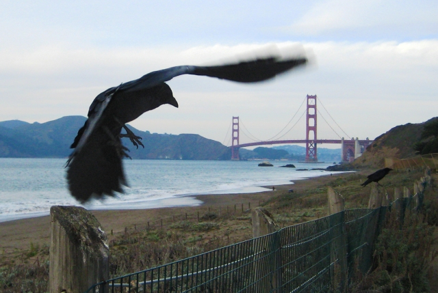The crow and the bridge