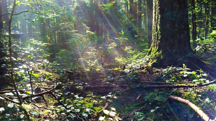 Sunlight sinters through