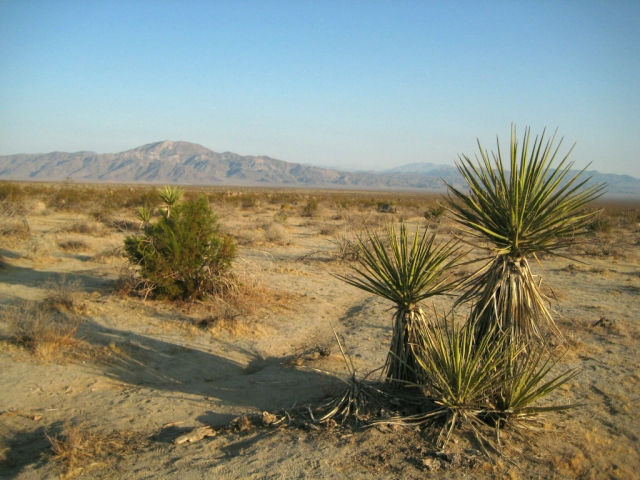 Near Joshua Tree National Park, California, United States of America