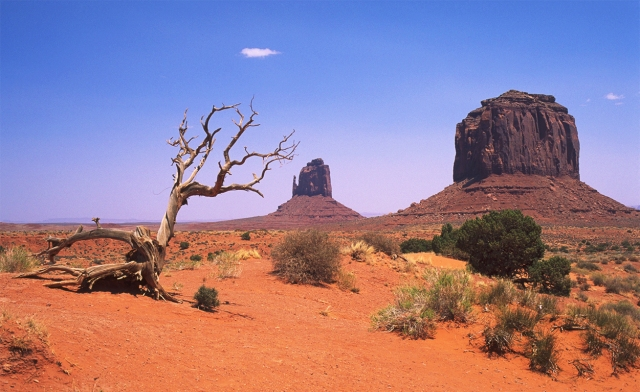 Dead bush and buttes, Monument Valley Navajo Tribal Park, Arizona, United States of America