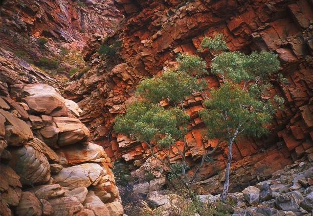 McDonnell Ranges, The Mereenie Loop, Northern Territory, Australia