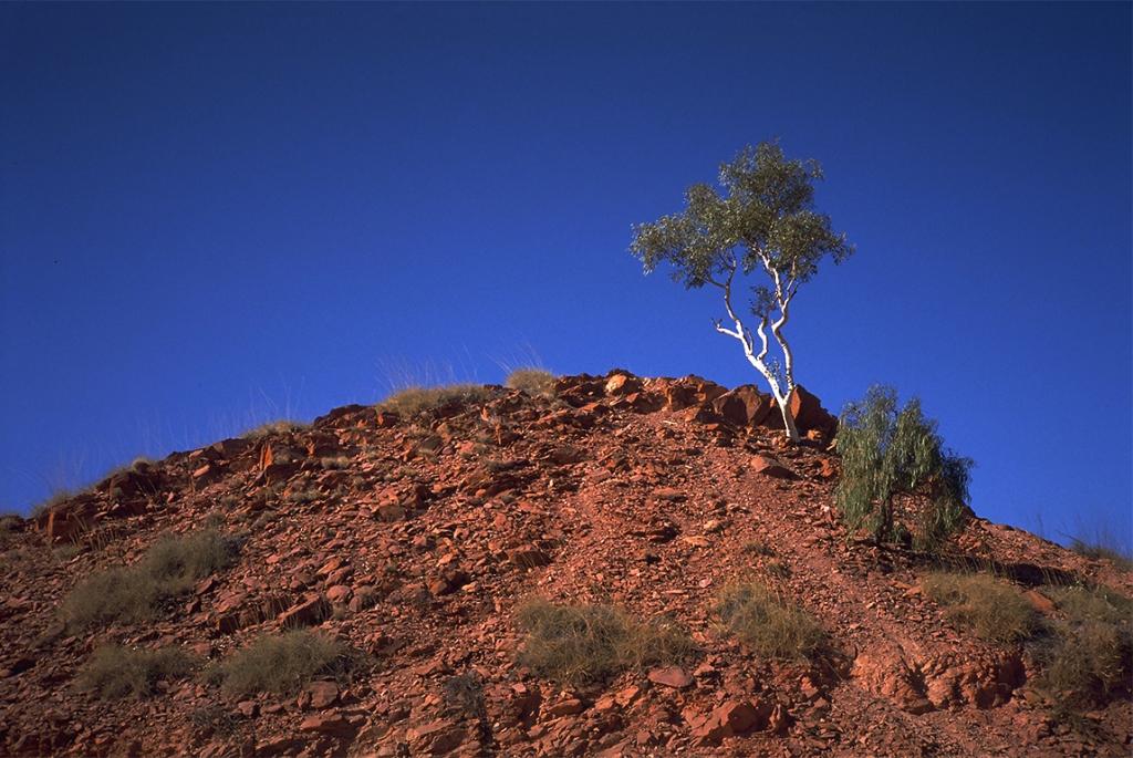 Ghost Gum, Simpson Desert, Northern Territory, Australia