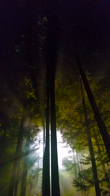 Light in the Forest, Deep Cove, British Columbia, Canada