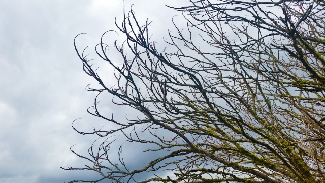 Leafless Boughs, Langley, British Columbia, Canada