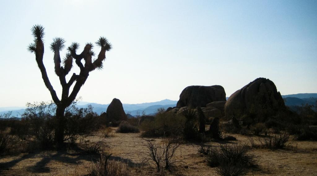Joshua Tree National Park, California, United States of America