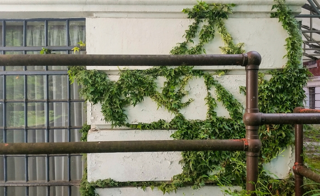 Vines & Iron, East lawn Building, Riverview Hospital, Coquitlam, British Colombia, Canada