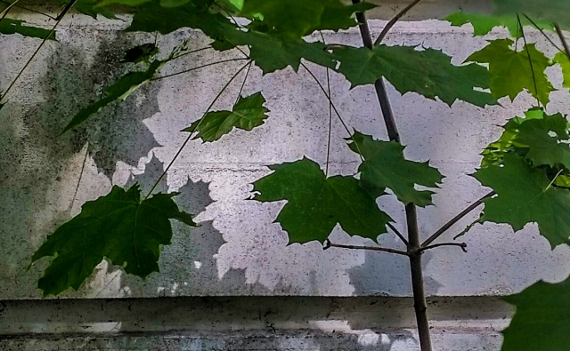 Shadows & Leaves, East Lawn Building, Riverview Hospital, Coquitlam, British Columbia, Canada