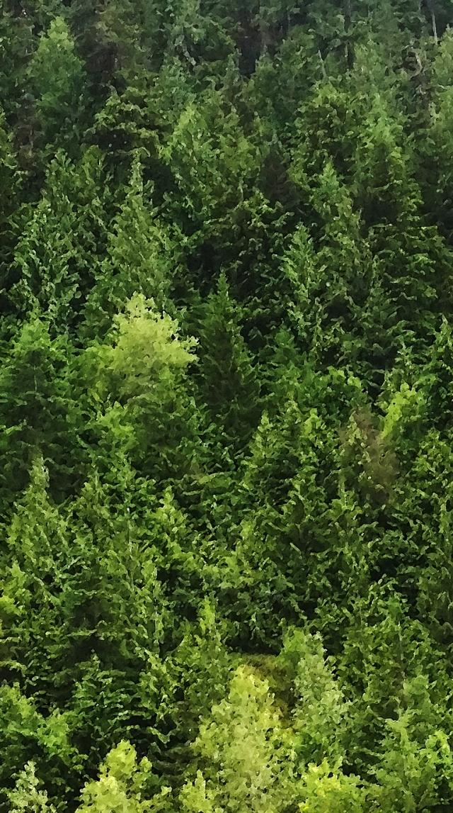 Hope Slide, Nicolum Valley, Cascade Mountains, British Columbia, Canada