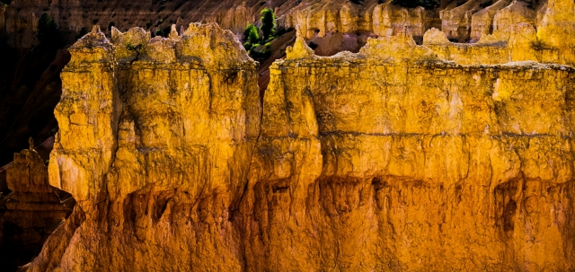 Golden Hoodoos, Bryce Canyon National Park, Utah, United States of America