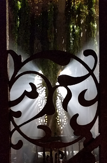 Light streaming through lattice and vines, Richmond, British Columbia, Canada