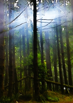 Light in the Trees, Seymour Demonstration Forest, North Vancouver, British Columbia, Canada