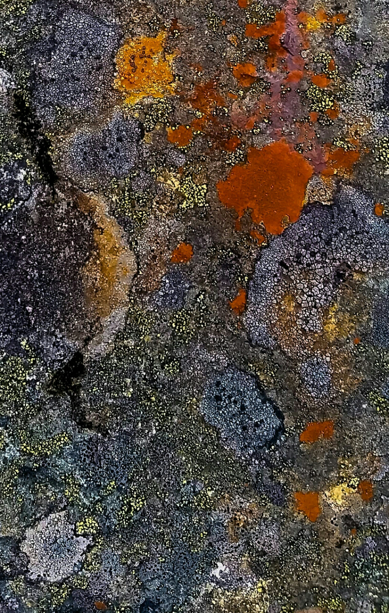Lichen on Granite, Hope Slide, Crowsnest Highway, Near Hope, British Columbia, Canada