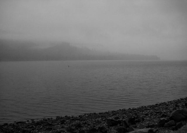 Fog Shroud, Oregon, United States of America