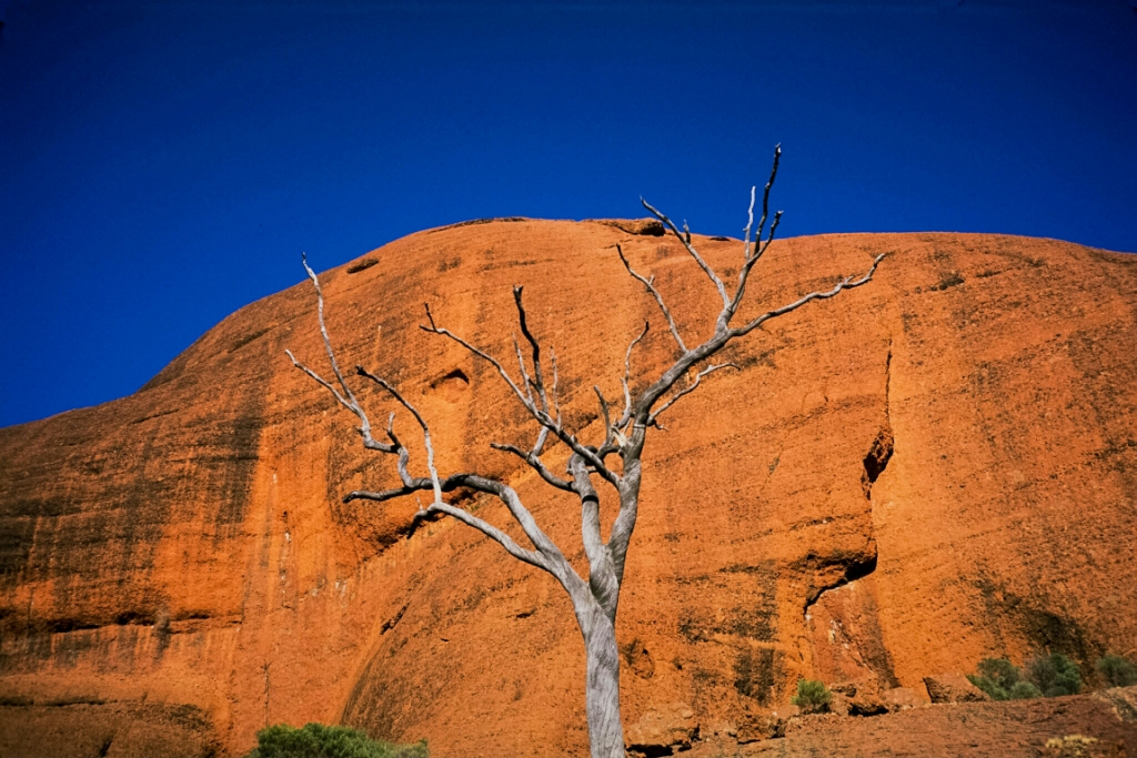 Stone and Wood and Time, Kata Tjuta, The Olgas, Northern Territory, Australia