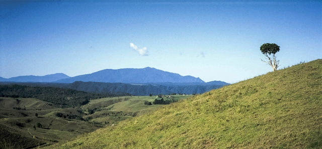 Tree on Grassy Hillside, Atherton Tablelands, Palmerston Highway, Queensland, Australia