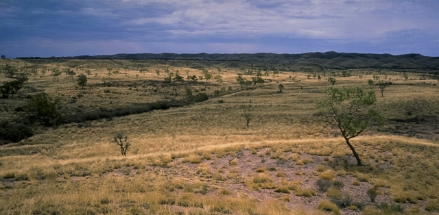 The Mereenie Loop, Grassland, Near Gosse Bluff, Northern Territory, Australia