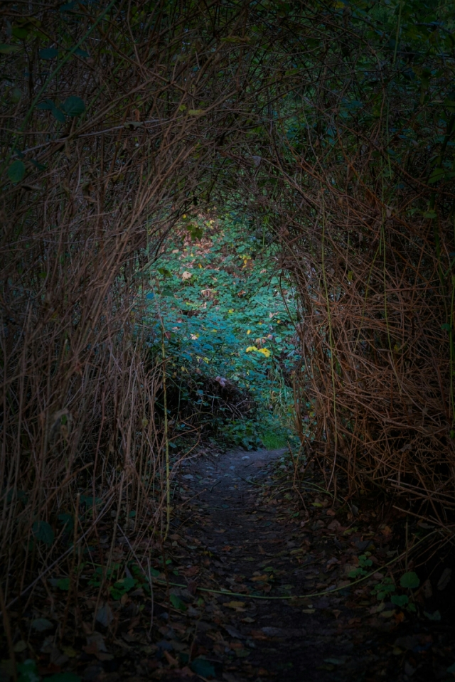 Path through brambles, Pacific Spirit Regional Park, Vancouver, British Columbia, Canada