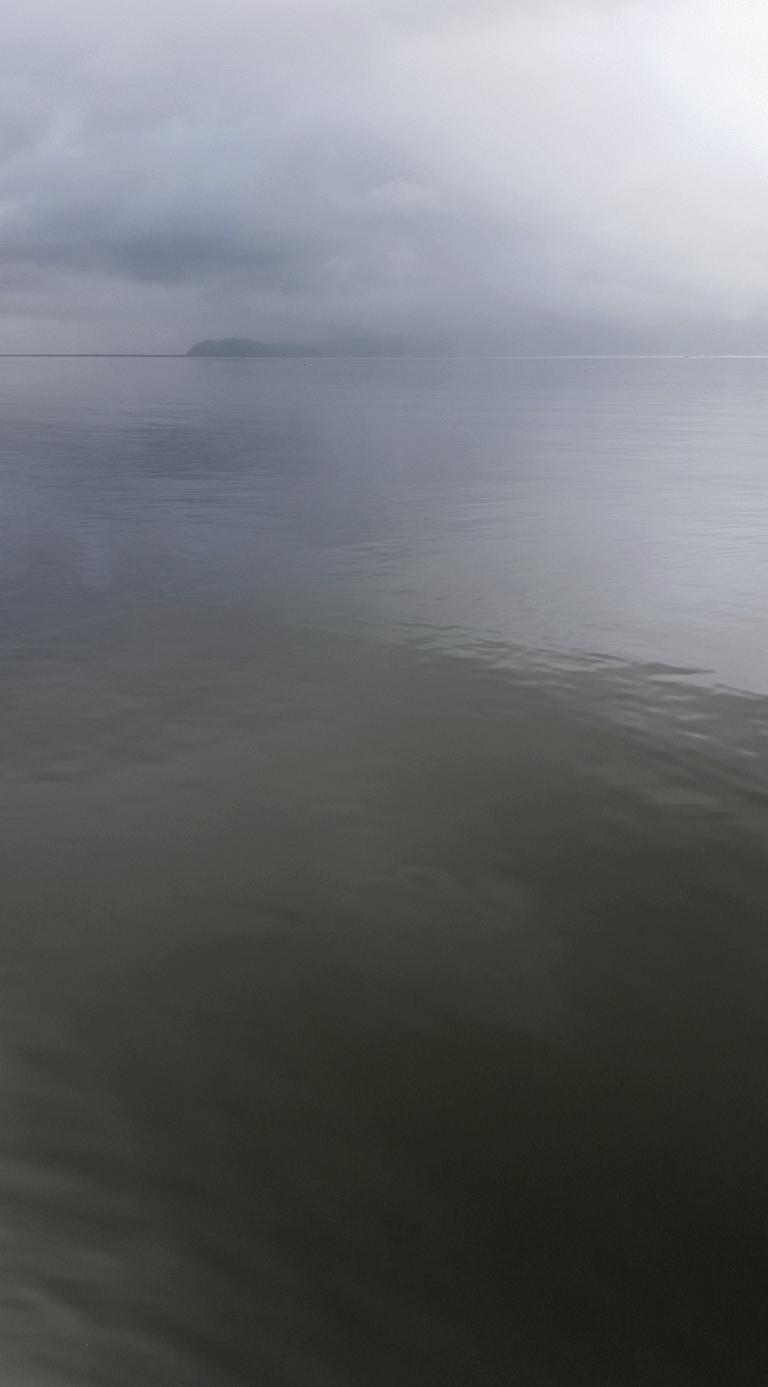 Howe Sound Greys, Porteau Cove, Sea to Sky Highway, British Columbia, Canada