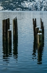 Gull and Pilings