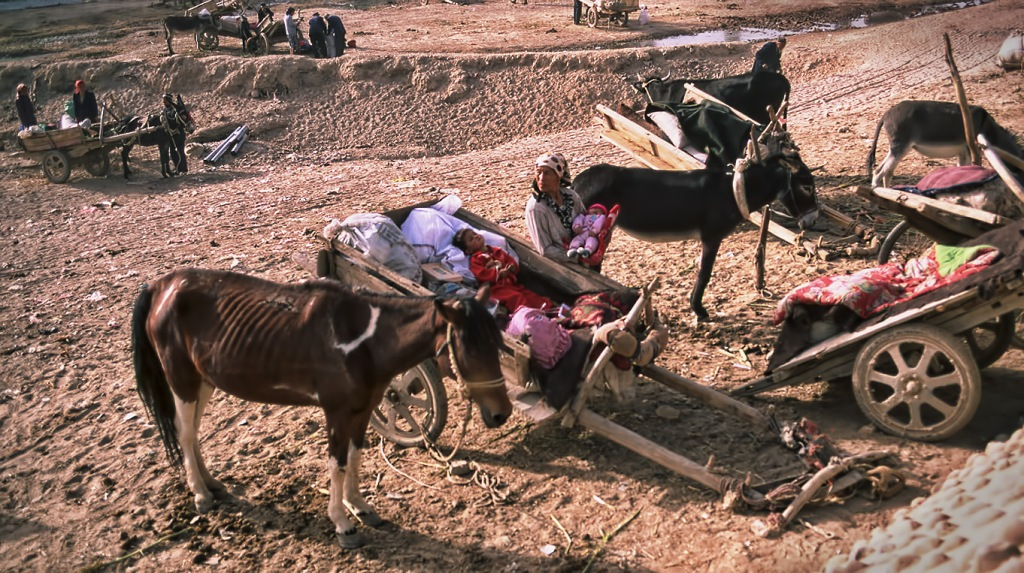 Market Day Donkey Cart Parking, Kuqa, Xinjiang, China