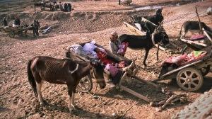 Market Day Donkey Cart Parking, Kuqa, Xinjiang, China