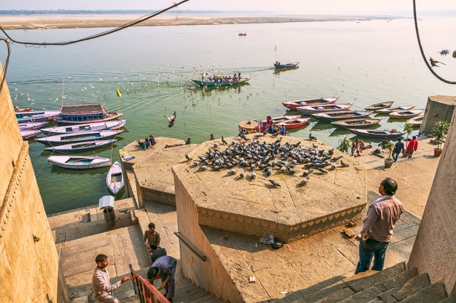 For the Birds, The Ganga (Ganges River), Kashi (Old Varanasi), Uttar Pradesh, India copy