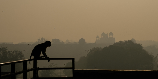 Monkey Business, Red Fort, Chandni Chowk, New Delhi, India copy