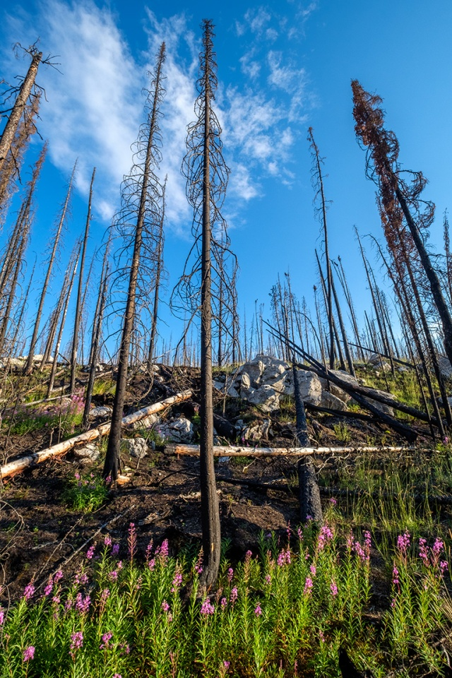 Flowers for the Trees II, Maligne Canyon, Jasper National Park, Alberta, Canada