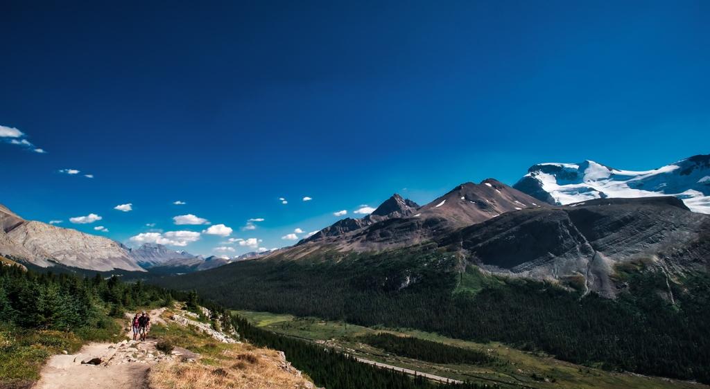 Wilcox Pass Trail, Jasper National Park, Alberta, Canada