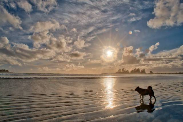 Nicki's Dog, Chesterman Beach, Tofino, British Columbia, Canada