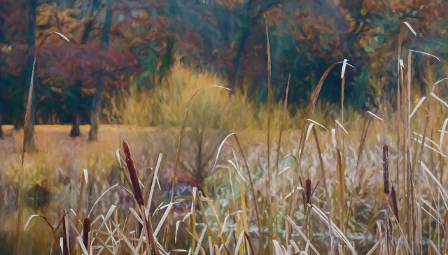 Cattails and Colour, Jericho Beach Park, Vancouver, British Columbia, Canada