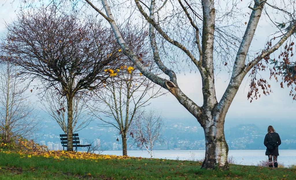 Empty Bench, Jericho Beach Park, Vancouver, British Columbia, Canada