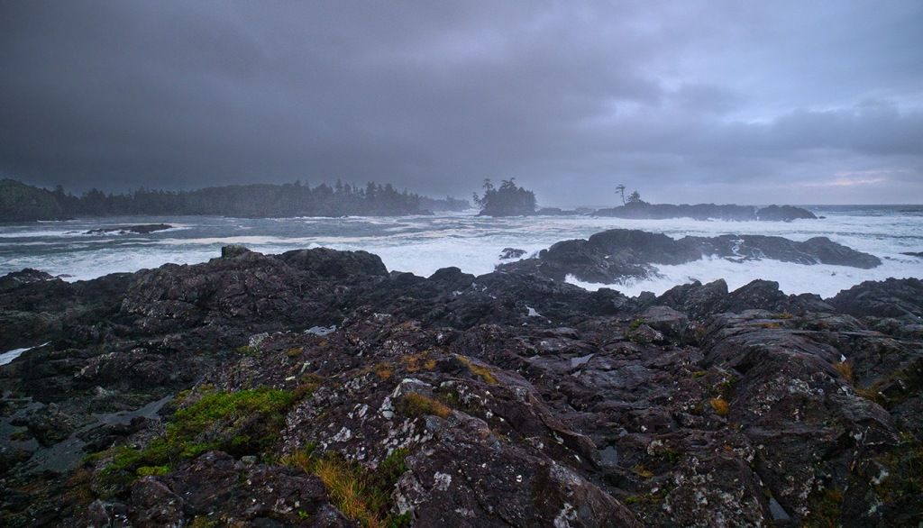 Clinging Green, Cygnet Cove, Ucluelet, Vancouver Island, British Columbia, Canada
