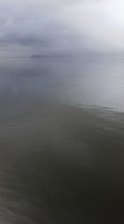 Howe Sound Greys, Porteau Cove Provincial Park, British Columbia, Canada