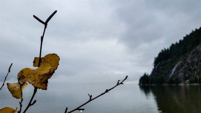 Like Leaves We Touch, Porteau Cove Provincial Park, Howe Sound, British Columbia, Canada