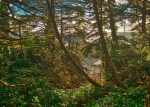Tangle of Life, Wild Pacific Trail, Ucluelet, Vancouver Island, British Columbia, Canada