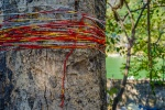 Pretty String, Rishikesh, Uttarakhand, India