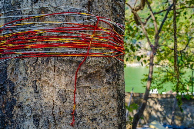 Pretty String, Rishikesh, Uttarakhand, India