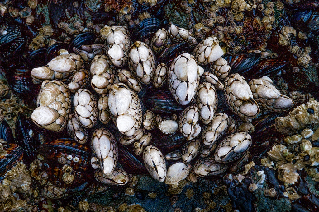 Cluster of Life, Ucluelet, Vancouver Island, British Columbia, Canada