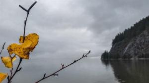 Fall Alder Colors, Porteau Cove, Howe Sound, Sea to Sky Highway, British Columbia, Canada