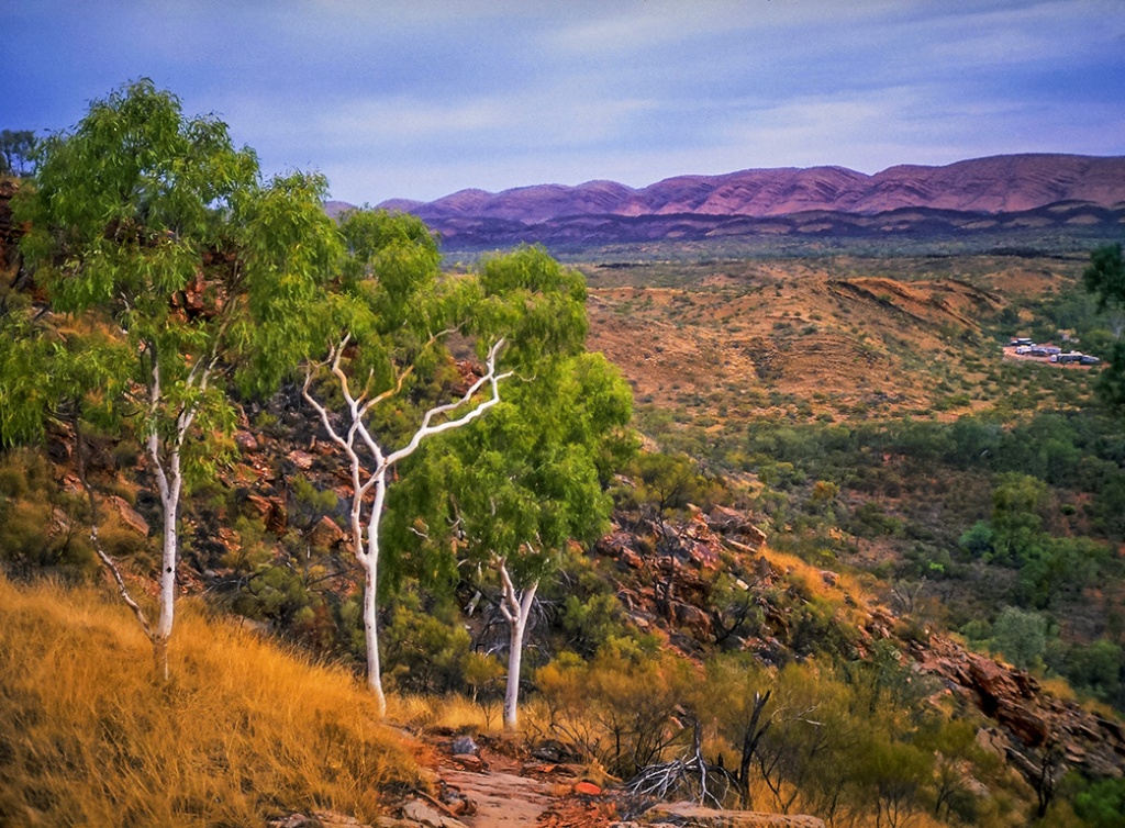 Ghost Gums MacDonnell Ranges Station, Northern Territory, Australia