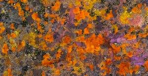 Lovely Lichen, Hope Slide, British Columbia, Canada