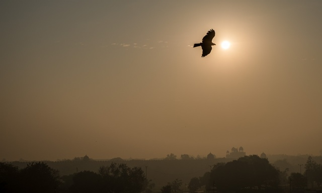 Black Kite over Red Fort, Chandni Chowk, Old Delhi, New Delhi, India III