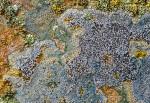 Badlands Lichen, Drumheller, Alberta, Canada