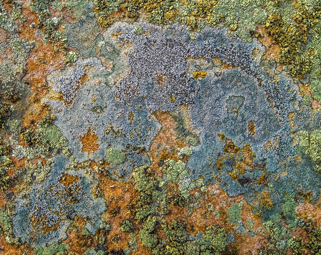 This Wee Continent of Life, Lichen, Drumheller, Alberta, Canada