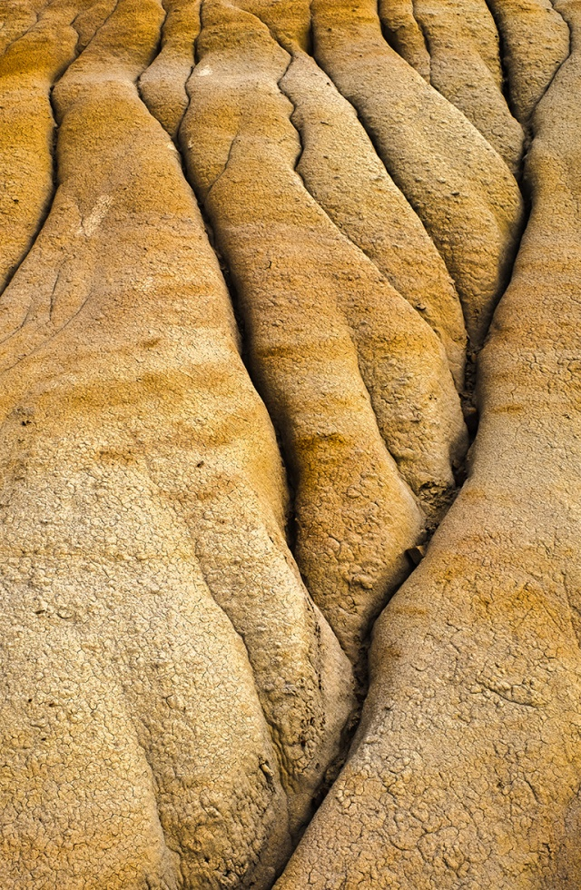 wizened and weathered, badlands, Drumheller, Alberta, Canada