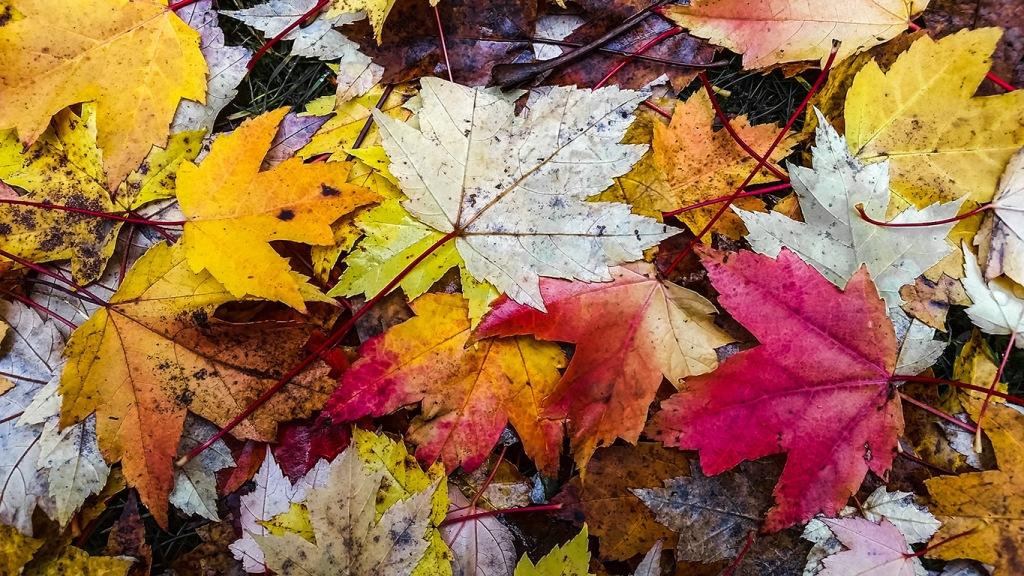 Fallen Colours, Stanley Park, Vancouver, British Columbia, Canada
