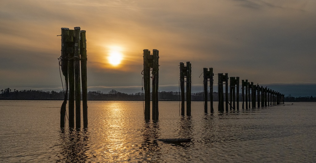 fraser river pilings, steveston, british columbia, canada