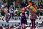Bird Feeders, Plaça de Catalunya, Barcelona, Catalonia, Spain